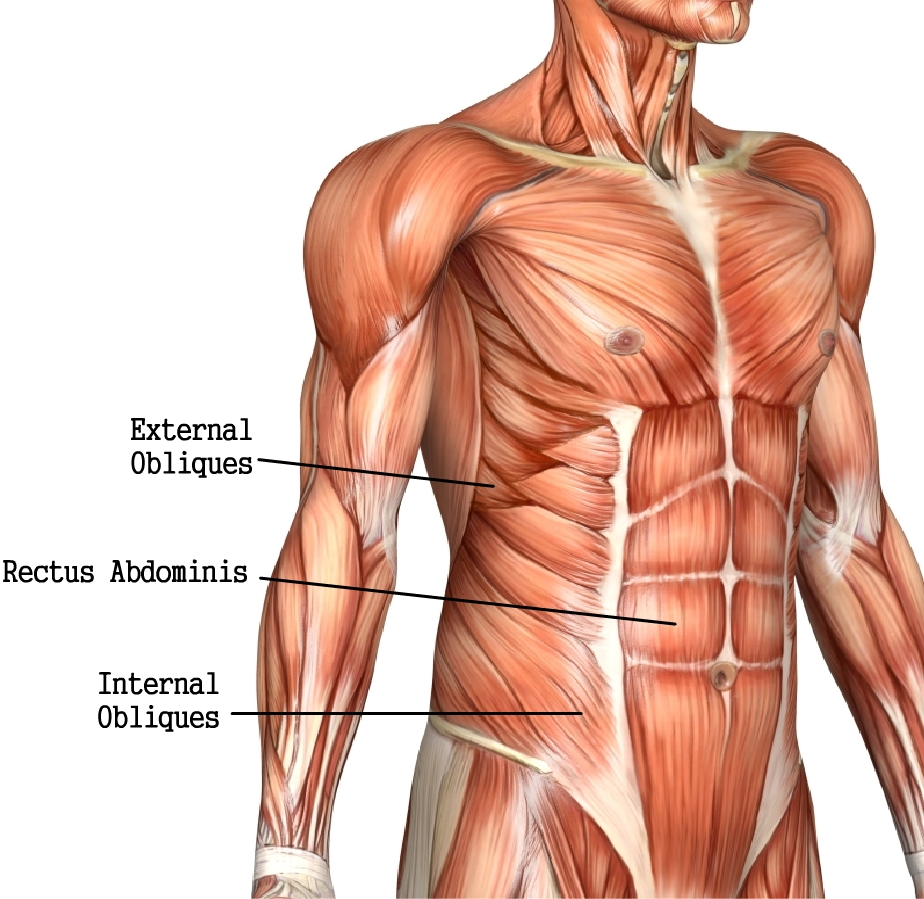 how to develop your chest muscles